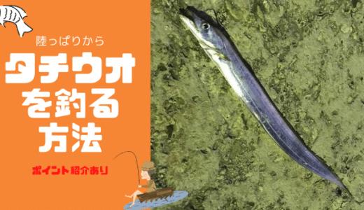 沖縄のおかっぱりからタチウオを釣る方法【ルアー編】 完成度60%