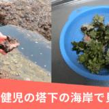 【沖縄県糸満】健児の塔下の海岸で貝い拾い!シュノーケリングも楽しめる秘密のポイント♪