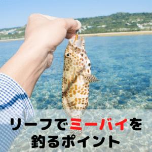 沖縄のリーフでミーバイを釣るポイント