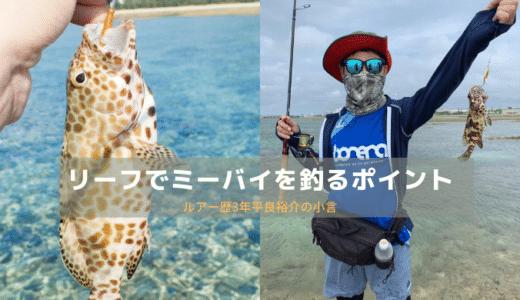 【沖縄のリーフ】イシミーバイをルアーで釣るための意識やポイント
